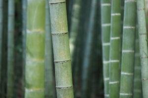 3 Gode grunde til at vælge bambus sengetøj