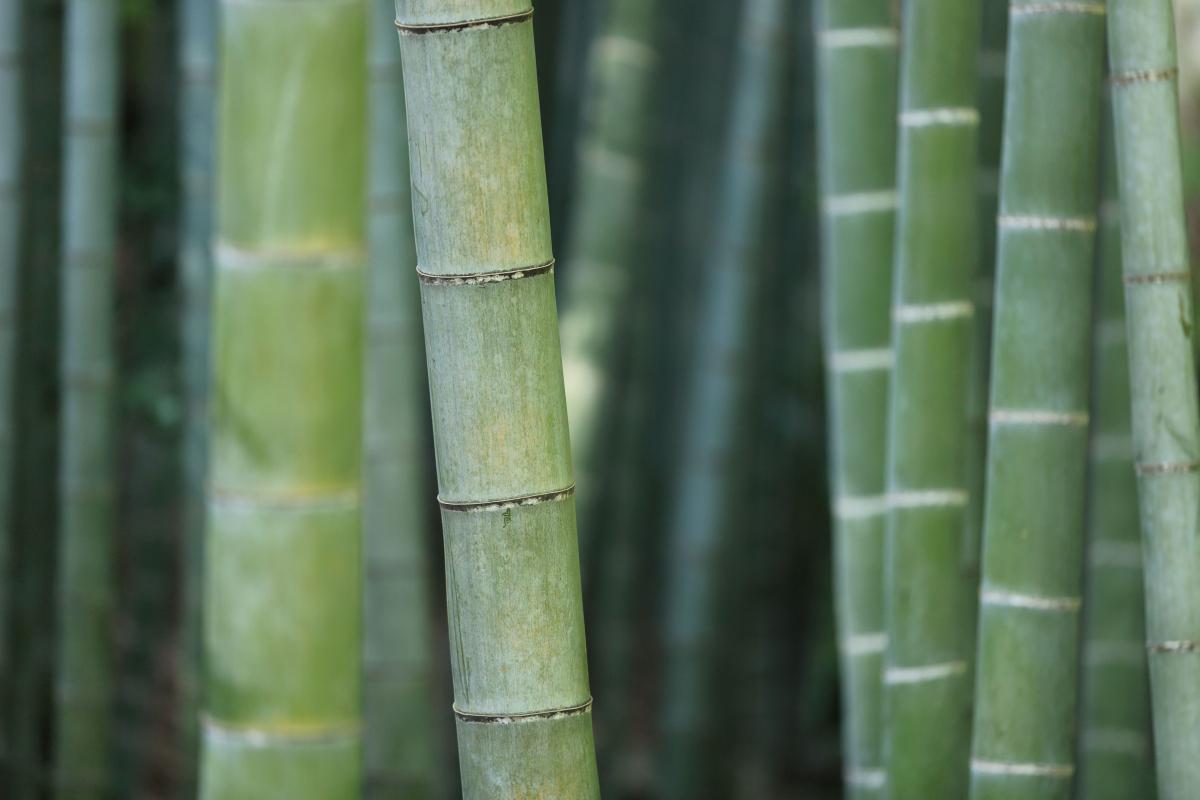 Picture of: 3 Gode Grunde Til At Vaelge Bambus Sengetoj Kulturnet Dk